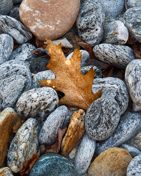 Dead leaf and pebbles
