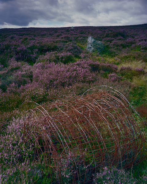 Heather, Limestone and Pig Wire