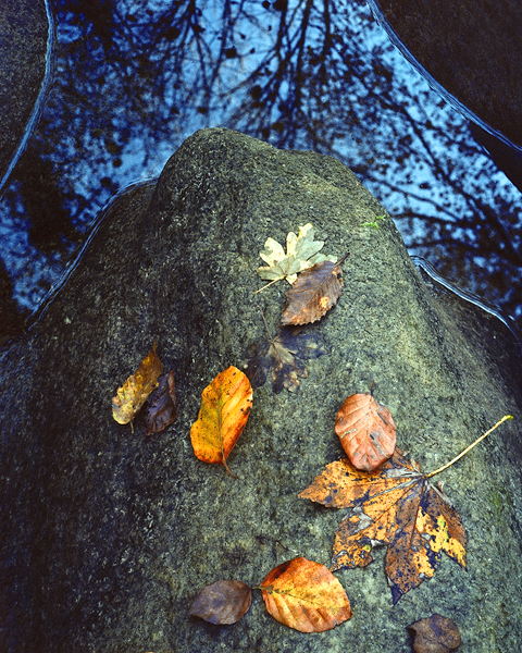 Leaves and Boulder