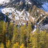 Larches and an Alp