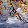Beech bough and white water