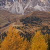 Larch and Dolomites
